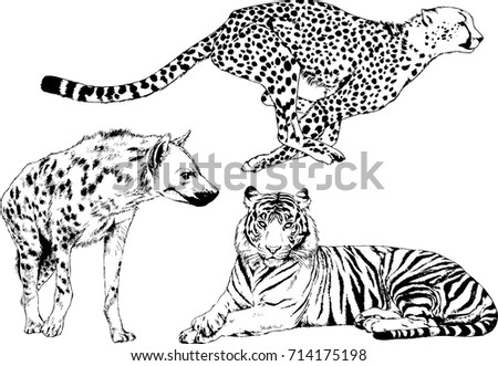 set of vector drawings on the theme of predators bears wolves hyena cheetah are drawn by hand with ink tattoo logos