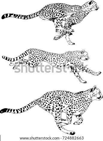 set of vector drawings on the theme of predators running cheetahs are drawn by hand with ink tattoo logos