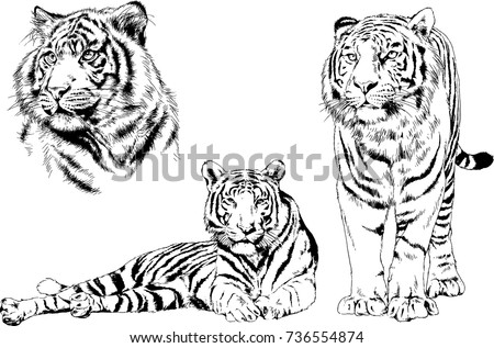 set of vector drawings on the