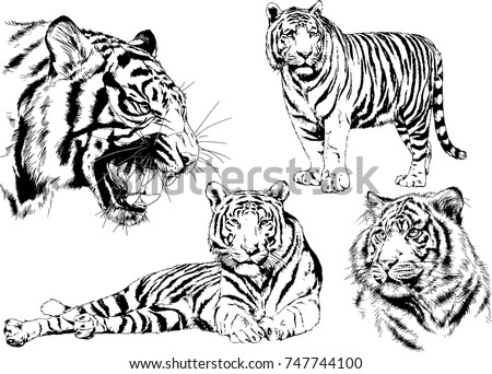 3f989b8f8 ... set of vector drawings on the theme of predators tigers are drawn by  hand with ink; Tiger face ...