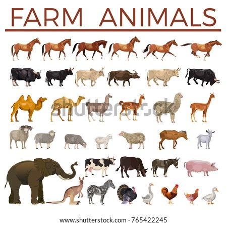 set of vector farm animals