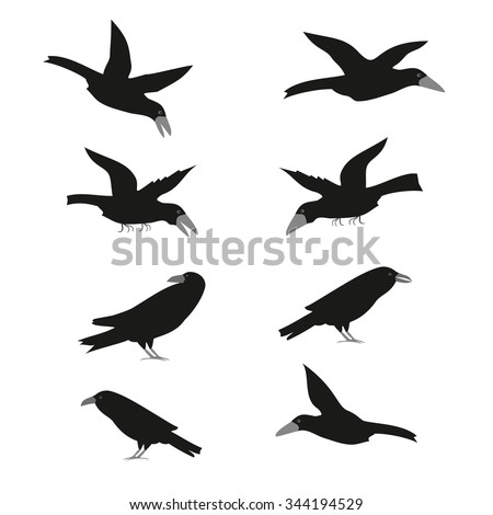 set of vector flat raven or