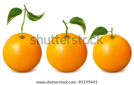 Set of vector fresh ripe oranges with leaves.