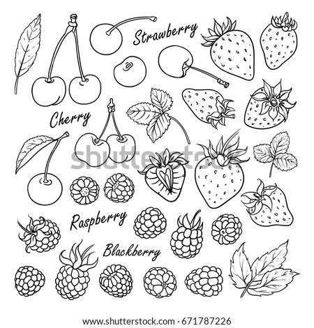 set of vector fruits and