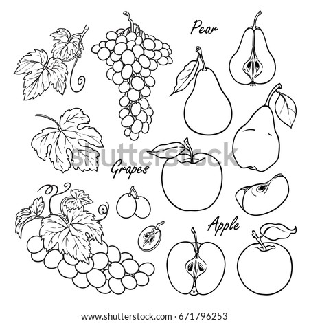 set of vector fruits  apple