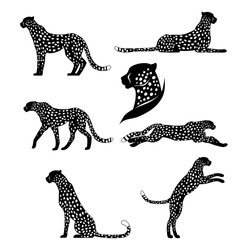 Set of vector graphic cheetahs. Spotted wild cats for your design.