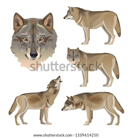 set of vector gray wolves