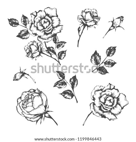Set of vector hand drawn illustrations of rose.