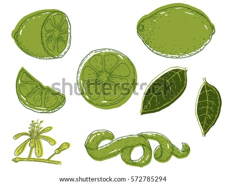 set of vector hand drawn lime