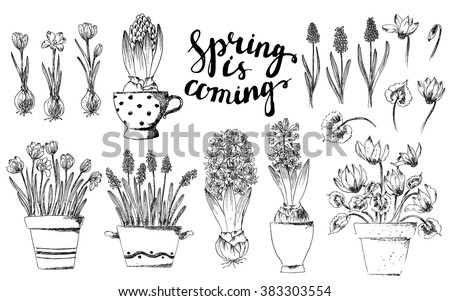 Set of vector hand drawn line art pot flowers and spring lettering. Spring hyacinth, grape hyacinth, crocus, cyclamen ink drawings for Easter decor, garden backgrounds, floral design.