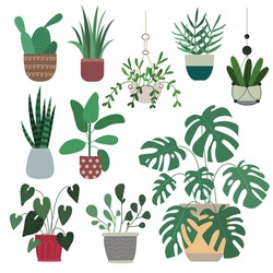 Set of 10 vector handdrawn houseplants - monstera, cactus, ficus, dracaena, aglaonema, sansevieria. Collection of indoor plants in pots. Vector flat illustration isolated on white background