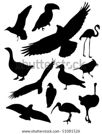 Set of 12 vector illustrated bird silhouettes