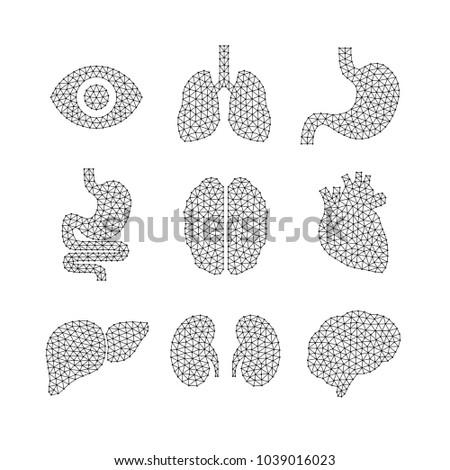Set of vector illustrations of human organs.