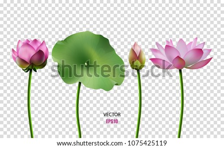 Set of vector images of lotus, water flower, pink lotus. 3D effect. EPS10