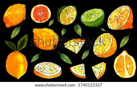 Set of vector lemons, leaves, sectional lemon, slices of lemons, sliced lime, whole lemon, collection of lemons, half a lemon