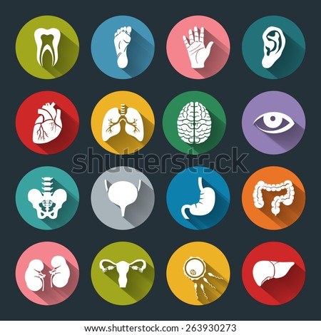 Set of vector Medical Icons with human organs in flat style with long shadows. Medical white icons on colored basis. Human anatomy flat icons for web and mobile applications.