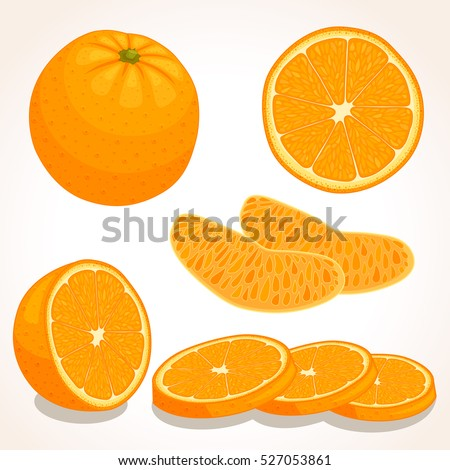 set of vector orange whole