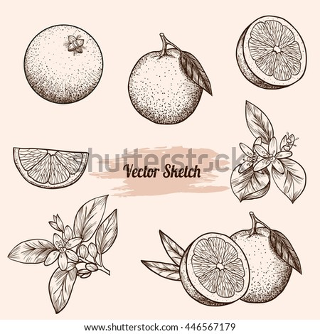 set of vector oranges