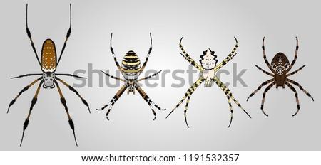 set of 4 vector orb weaver
