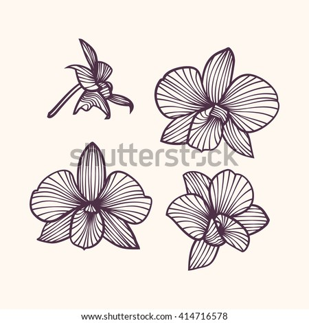 set of vector orchids isolated