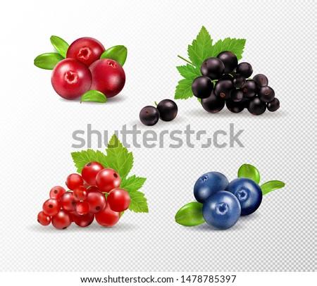 set of vector realistic berries
