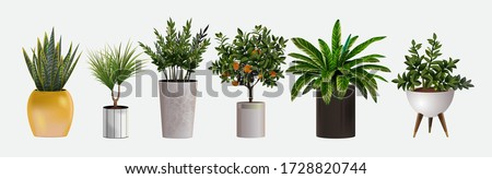 Set of vector realistic detailed house or office plant for interior design and decoration.Tropical and Mediterranean plant for interior decor of home or office