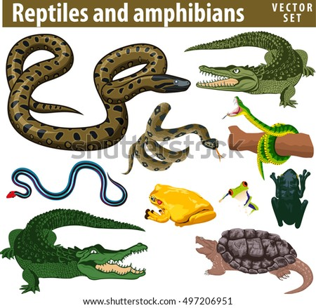 set of vector reptiles and