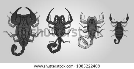 set of 4 vector scorpions from