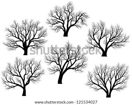 Set of vector silhouettes of deciduous large trees without leaves during the winter or spring period.