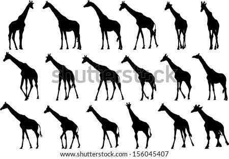 Set of vector silhouettes of giraffes