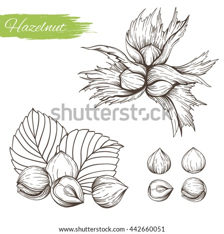 set of vector sketches of nuts
