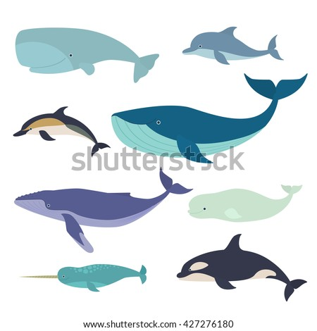 set of vector whales and