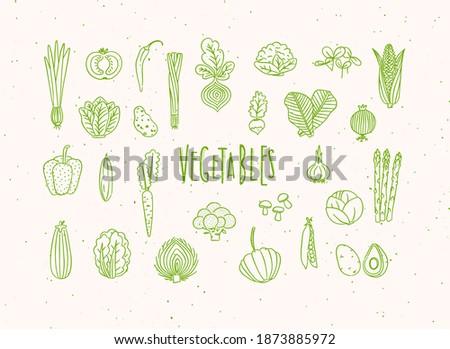 Set of vegetable icons onion, tomato, lettuce, chili, pepper, beets, radish, corn, leek, cucumber, carrot, garlic, asparagus, mushrooms, eggplant, lettuce, artichoke, broccoli, pumpkin, peas, avocado