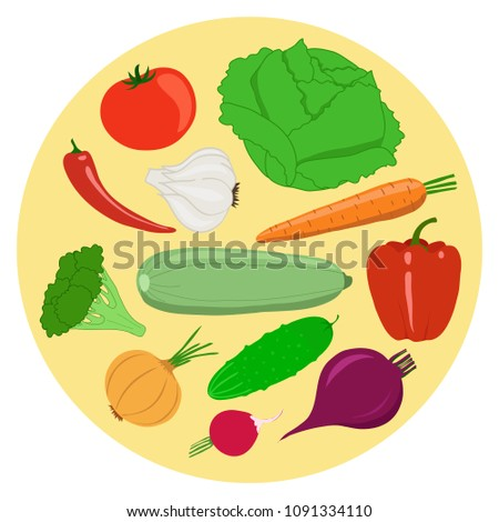 Set of vegetables. Cabbage, tomato, garlic, carrot, pepper, zucchini, broccoli, onion, cucumber, beet, radish. Vector illustration.