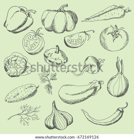 Set of vegetables: sweet pepper, pumpkin, tomato, carrot, turnip, parsley, dill, cucumber, cabbage, eggplant, onions, garlic, squash, hot peppers. The sketch marker. Vector #672169126
