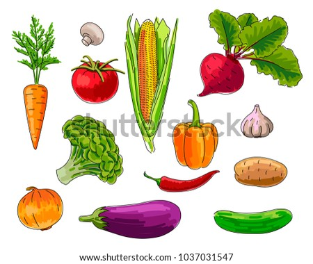 set of Vegetebles, handrawn illustration, isolated, colorful outlined graphic #1037031547