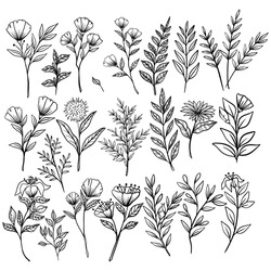 Set of vintage flowers and branches with hand drawn or sketch style on white background