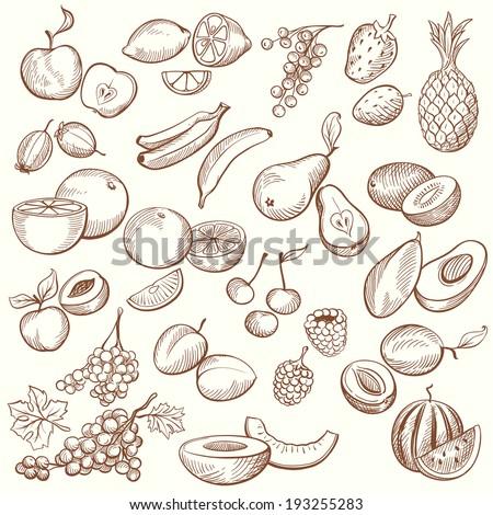 set of vintage sketches fruits