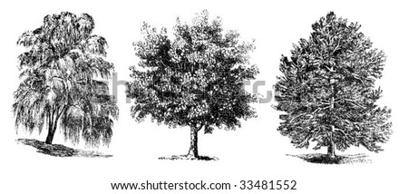 set of vintage trees drawing