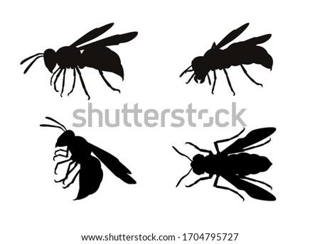 set of wasps isolated on white