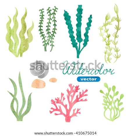 set of watercolor seaweed