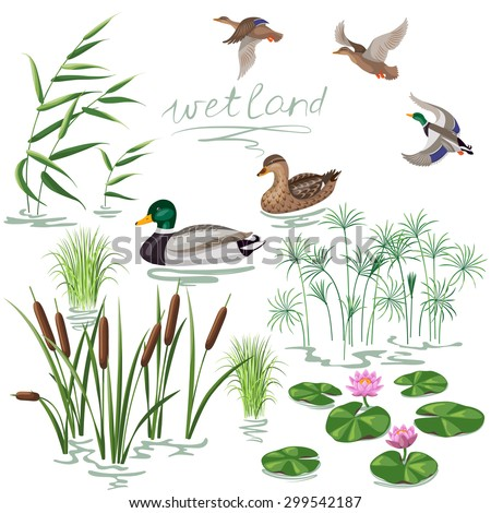 set of wetland plants and birds