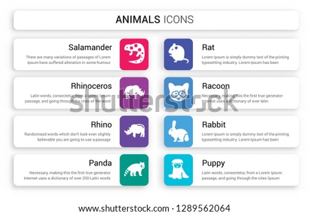 Set of 8 white animals icons such as salamander, Rhinoceros, Rhino, panda, Rat, Racoon isolated on colorful background