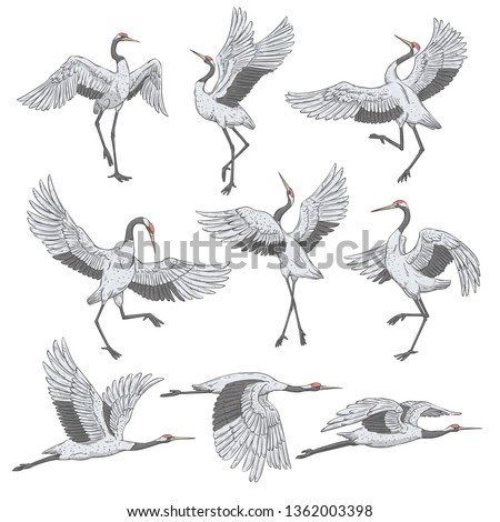 Set of white cranes in different positions, collection of hand drawn japanese birds flying, standing, dancing. Symbol of traditional asian art, isolated flat vector illustration on white background.