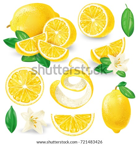 Set of whole, cut in half, sliced on pieces fresh lemons, leaves and flowers, twisted lemon peel hand drawn vector illustration isolated on white background. Vibrant juicy ripe citrus fruit collection