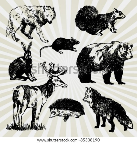 Set of Wild Animals Hand Drawn