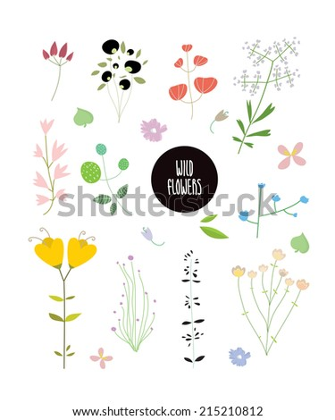 Set of wild flowers