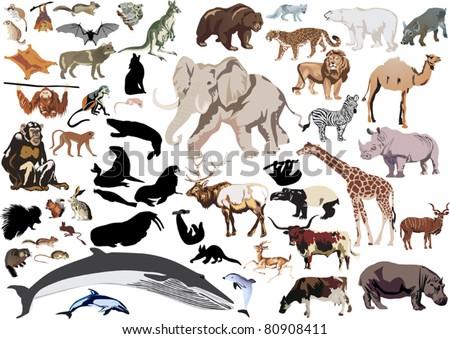 set of wild mammals isolated on white background