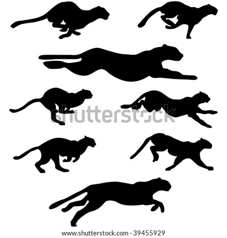 set of wildcats  puma  running