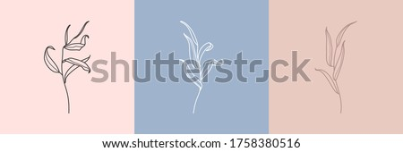 Set of Willow branch with leaves in a trendy minimalistic style. Outline of a botanical design elements. Floral vector illustration. For printing on t-shirts, web design, posters, logo creation Stock fotó ©